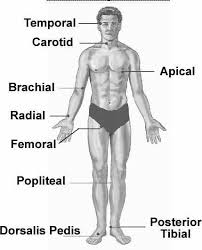 Peripheral Pulses Charting Central Peripheral Pulses Medical Stuff Pinterest