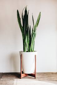 ... Large Indoor Plant Pots Decortaive Planters Stand White Pots Tall Potted  Plants Indoor: ...