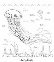 Small Picture Jellyfish Coloring Pages Sea Creature Animal Coloring pages of