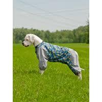 "Одежда для <b>собак</b>, лежаки (лежанки) для <b>собак</b>. ТМ ""<b>Happy</b> Puppy"""