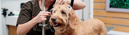 Natural Treatments for Skin Problems in Dogs | Petco