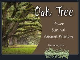 oak tree meaning symbolism flower meanings 1280x960