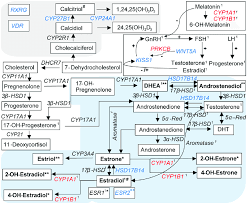 Differentially Expressed Genes Playing A Role In Sex Hormone