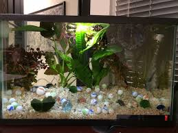 Labyrinth Fish Tank How To Properly House Betta Fish Home 7 Steps