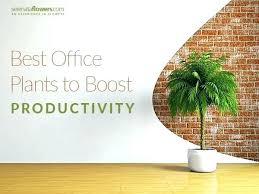 Office cubicle plants Low Light Best Office Cubicle Plants Desk For My Plant An Architectures Excellent Great Indoor Feng Shui With Yunaq Interior Decor Ideas Great Office Desk Plants Best Cubicle For My Plant An Architectures
