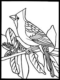 Small Picture Cardinal Coloring Page Trendy Coloringsws Cardinals Coloring