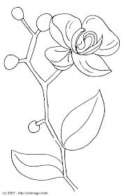 Coloriage A Dessiner De Plante A Imprimerl Duilawyerlosangeles Coloriage A Dessiner De Plante A Imprimer L