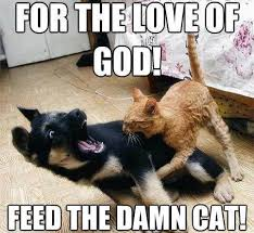 funny-cat-bites-dog-memes - via Relatably.com
