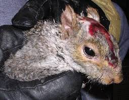 Grey Squirrel Age Chart Basic Steps To Taking Care Of A Baby Squirrel Chriss