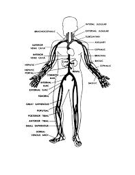 Figure 9-6. Main veins of the human body. - Basic Human Anatomy