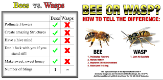 Wasp Identification Chart Please Stop Sharing The Wasps Are Jerks Memes Ask An