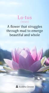 Word Of The Day Lotus Word Of The Day Lotus Flower Quote