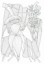 Grote Mensen Kleurplaten Fris Schilderijen Van Orchidee N Andere