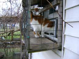 outdoor cat tree house plans gorgeous
