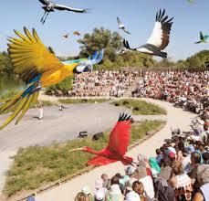 """Résultat de recherche d'images pour """"parc des oiseaux villars les dombes spectacle"""""""