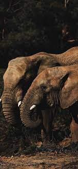 Elephant -iphone-wallpaper-hd-art ...