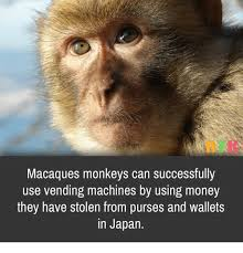Monkey Uses Vending Machine Beauteous Macaques Monkeys Can Successfully Use Vending Machines By Using
