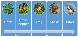 animal food chain. Exellent Food Food Chain With Animal Chain M