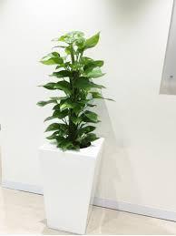 Premium Wedge Planter