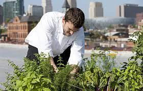 long live the urban gardens