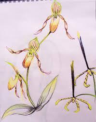 орхидея эскизы кинозавр