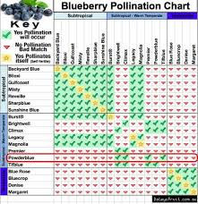 Pollinators For The Powderblue Blueberry Brightwell