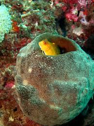 Resultado de imagen para esponjas de mar
