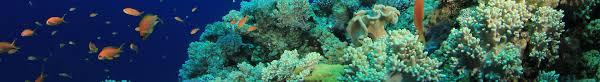 homepage iantd diver verification