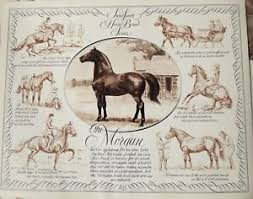 Details About Horse Breed Chart Morgan In Portrait And Action By Sam Savitt