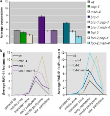Average Apoptosis Levels Scored In Various Genetic