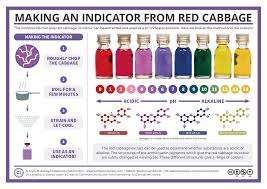 Red Cabbage Juice Indicator Chart Making A Red Cabbage Ph Indicator The Method And The