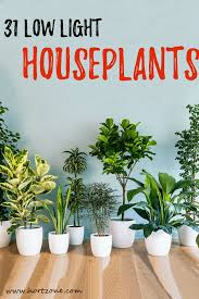House Plants Low Light Requirements 31 Low Light Houseplants That You Shouldnt Miss Out Hort Zone