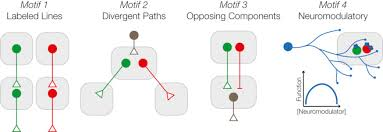 neural circuit motifs in valence processing sciencedirect full size image