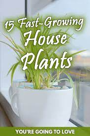 15 fast growing house plants you re