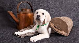 Best Large Breed Puppy Food Make The Right Choice