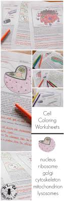 Cell And Organelle Coloring Page And