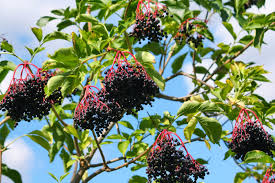 Great List Of Fruit Trees That Can Be Grown In North Texas Look Fruit Trees For North Florida