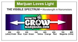Light Spectrum Plant Growth Chart Bedowntowndaytona Com