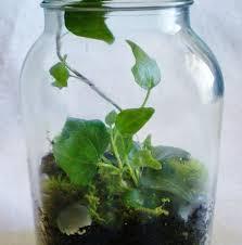 Simply Ivy Mason Jar Terrarium | For the Home | Pinterest | Mason jar  terrarium, Terrarium, Mason jars