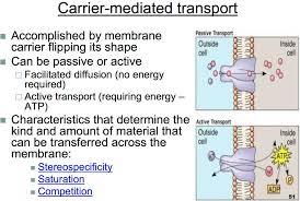 Active Vs Passive Transport Venn Diagram Ccf Physiology L1 2 Intro Homeostasis Membrane Transport Active