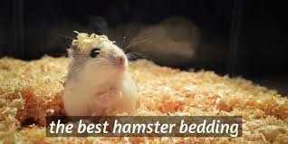 4 best hamster bedding substrate