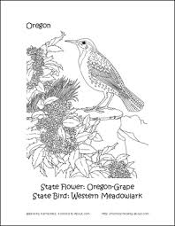 Small Picture Oregon Printables Oregon State Bird and Flower Coloring Page