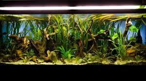 Low Light Cold Water Aquarium Plants Aquarium Lighting Guide For Fish Owners