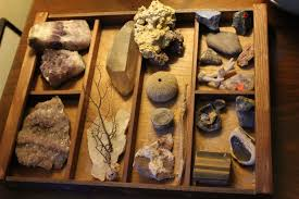 Build A Cabinet Of Curiosities Science Friday