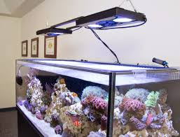 some of the best looking contemporary aquariums are rimless tanks with a light fixture or light rack suspended from the ceiling