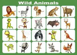 Animal Stock Pictures Royalty Free Wild Animal Chart