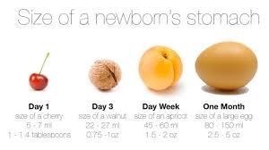 Baby Stomach Capacity Chart Newborn Stomach Capacity Jo Becketts Breastfeeding Resources