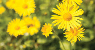33 types of yellow flowers