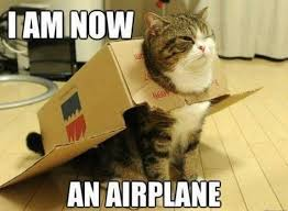 Image result for funny picture of cat