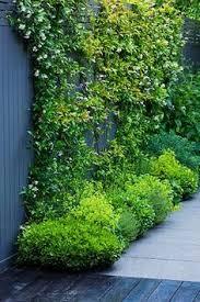 Personalise Your Fence With Climbing Plants  FenceCorpClimbing Plants For Fence